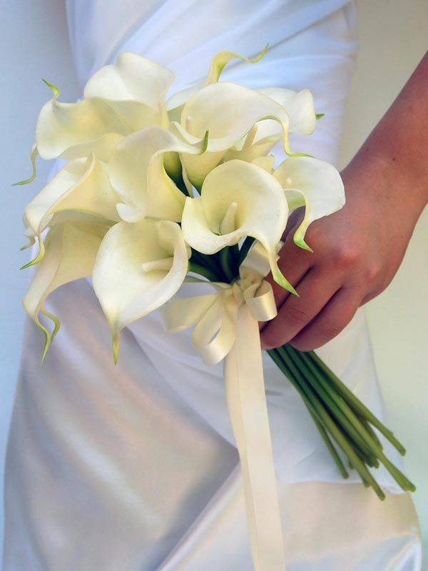 What Is The Spiritual Meaning Of The White Lily Google Search