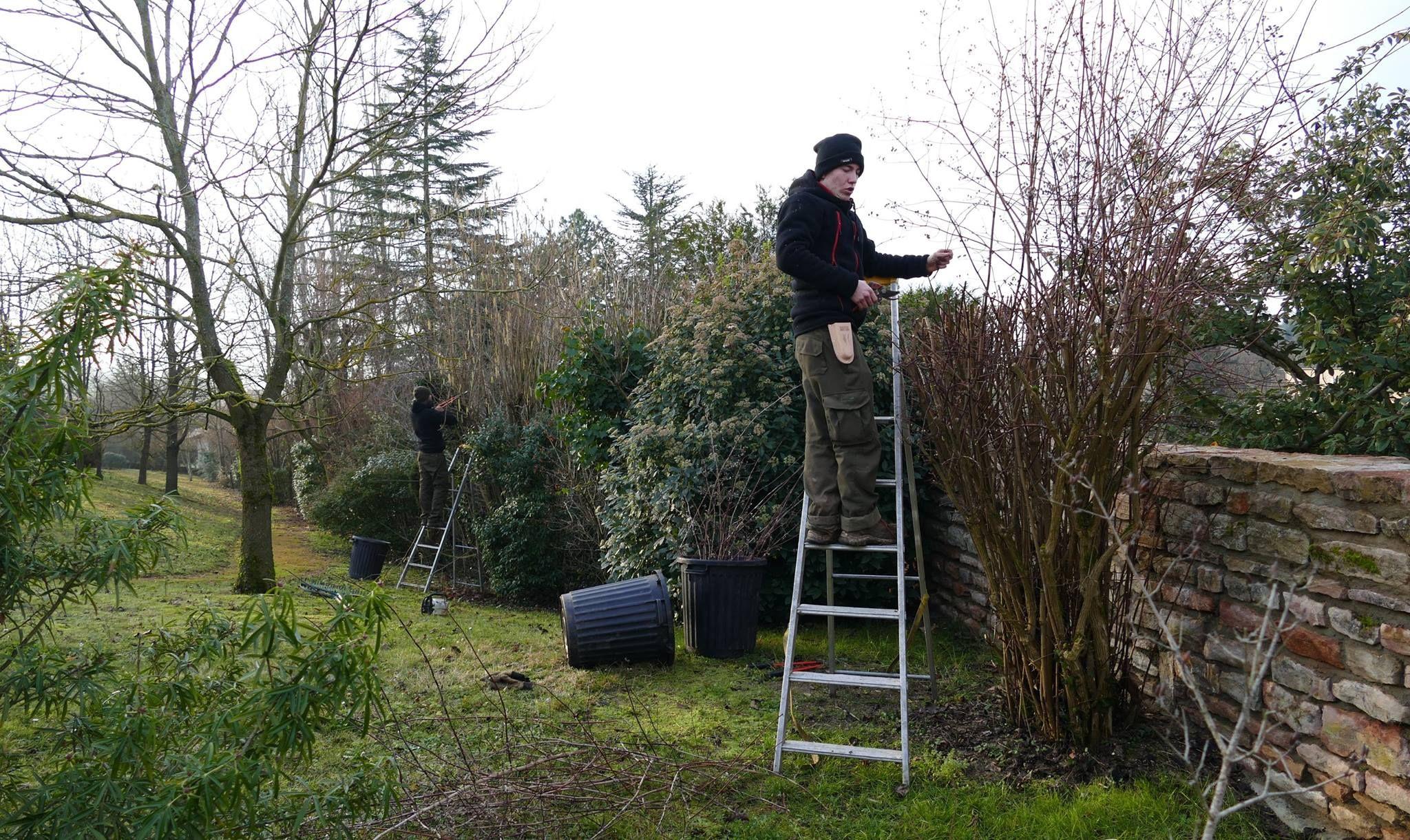 Tailles D Arbustes Varies Jo Et Mounir A La Manoeuvre Entretien Jardin Paysagiste Arbuste