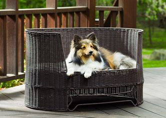 Indoor Outdoor Dog Day Bed - Newitem258675969 - Puppy & Dog Beds ...