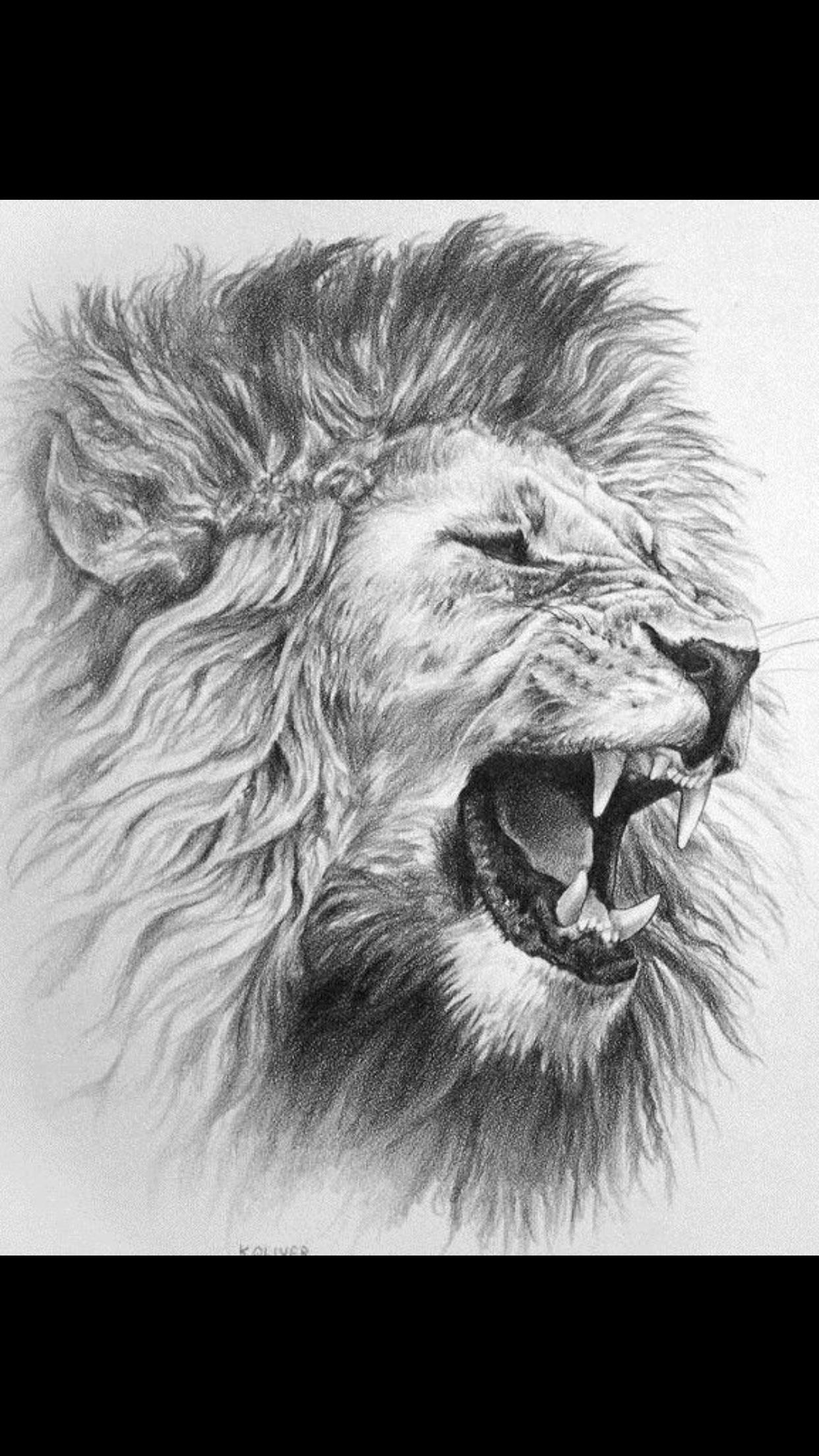 Pin von Vince Jackson auf Ideas Tierillustrationen