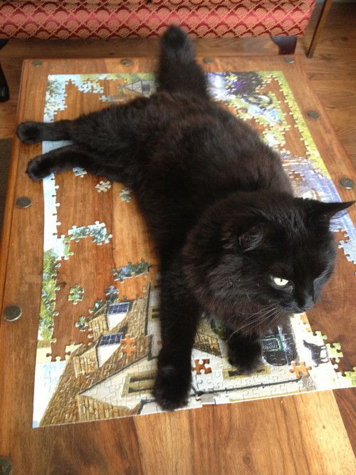 """I'll help you with this jigsaw puzzle"""