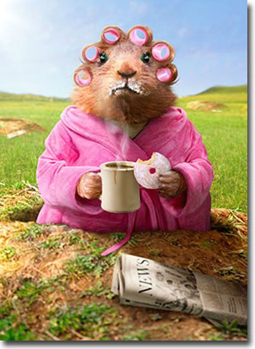 Morning ground hog funny just for fun card greeting card by avanti morning ground hog funny just for fun card greeting card by avanti press ebay m4hsunfo