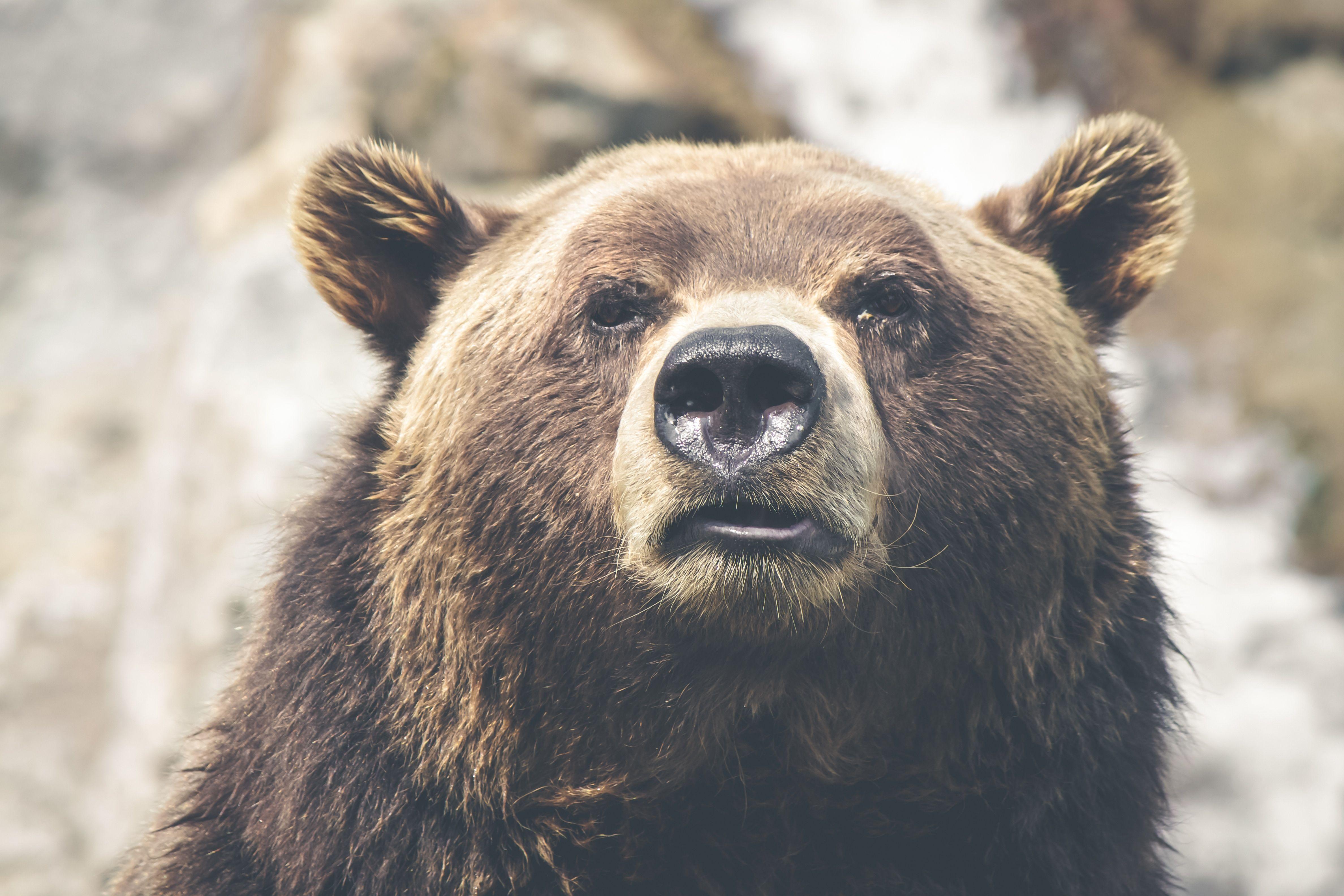 Animali Onnivori Esempi E Curiosità Animalpedia Animali Stampe