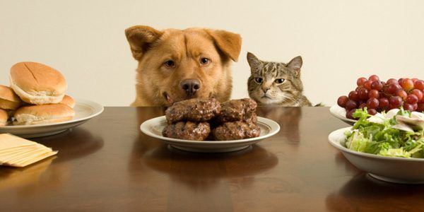dog food poisoning can prove fatal for your pet if necessary symptoms are not identified from list so that you can give medication and treatment