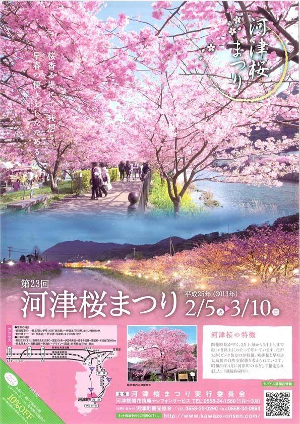 まつり 河津 桜