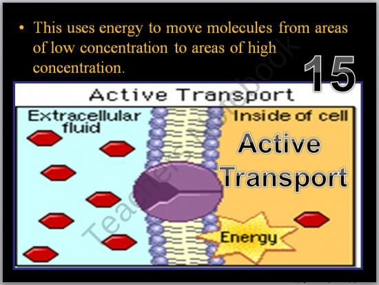 Cell Transport Osmosis Diffusion Active Transport Powerpoint Game