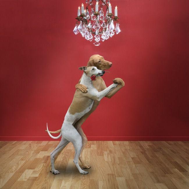 Картинки, прикольная картинка танцор