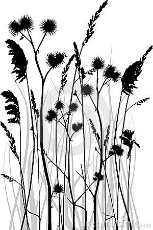 tall grass silhouette. Grass Silhouette Royalty Free Stock Photography - Image: 14042107 Tall L