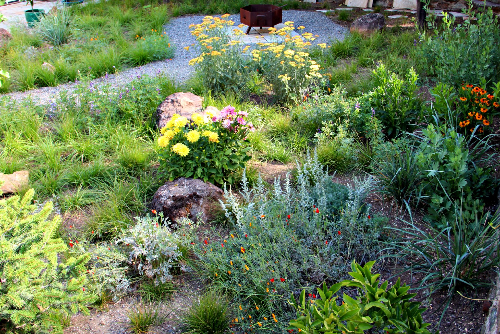 California Native Gardens Lawn Less Is More Pinterest