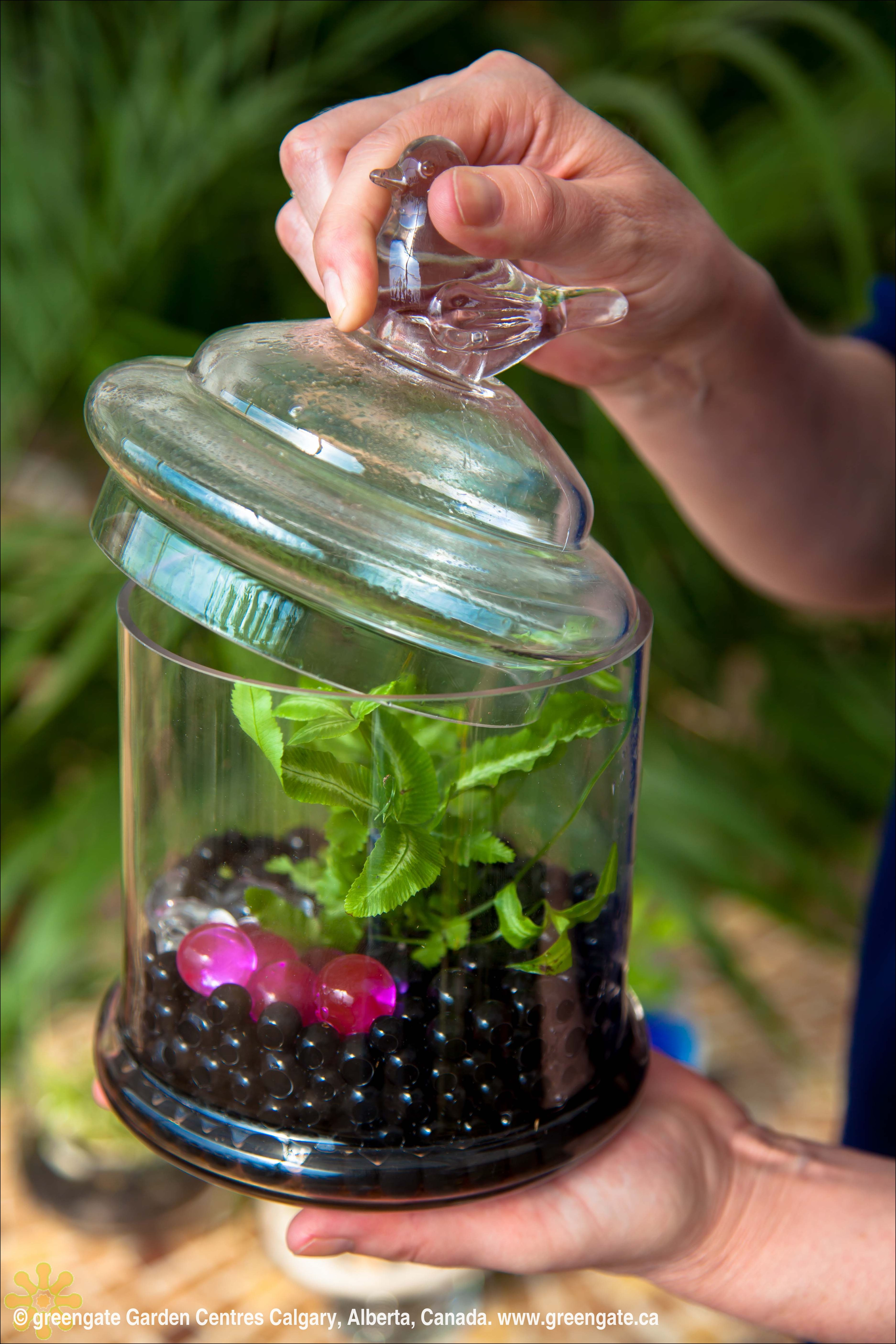 greengate Garden Centres terrarium. Healthy plants