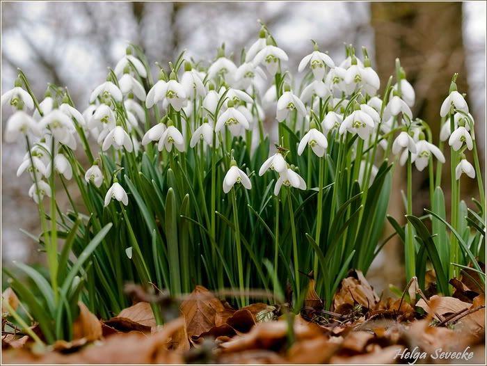 14 Awesome Spring Flower Photos Xemanhdep Com Photos Stock Images Spring Flowers Flowers Flower Photos