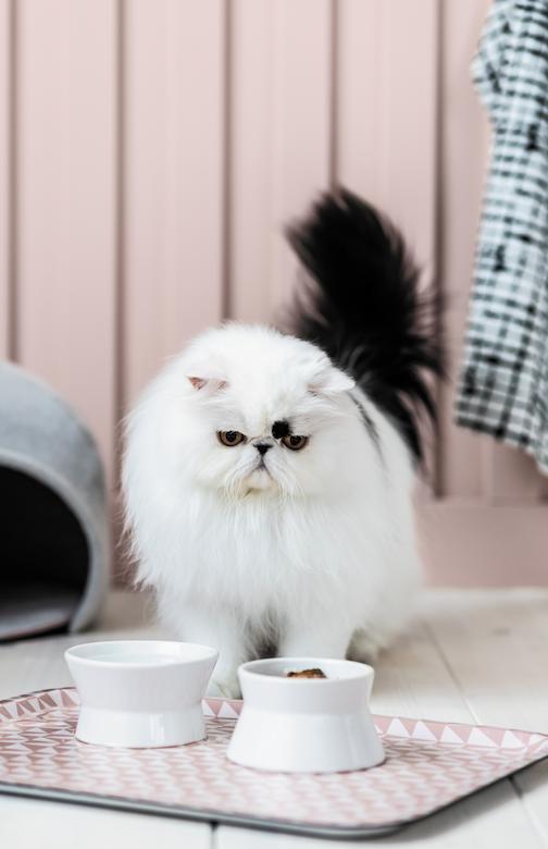 Collection Kitten Checklist Pet Circle
