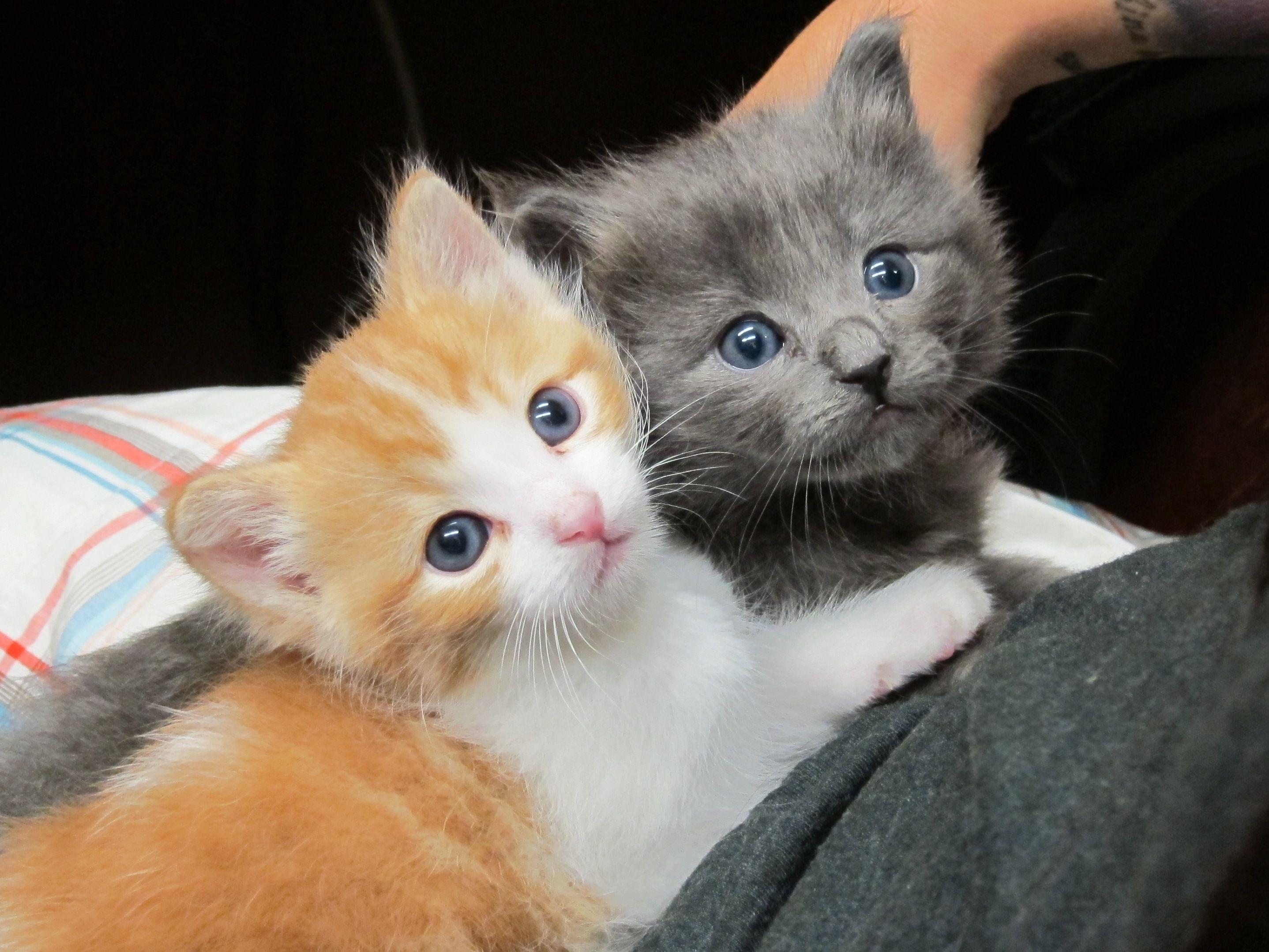 Cute rescue kittens! kitten animal rescue Baby cats