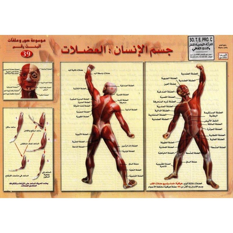 بحث رقم39 العضلات Synotec Liste De Souhaits Produit