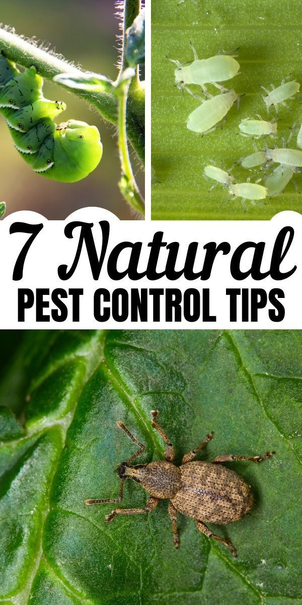 Photo of Natural Pest Control for the Garden
