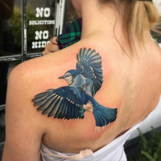 blue jay tattoo truth and triumph dayton oh daniil beauty pinterest tattoos blue jay. Black Bedroom Furniture Sets. Home Design Ideas