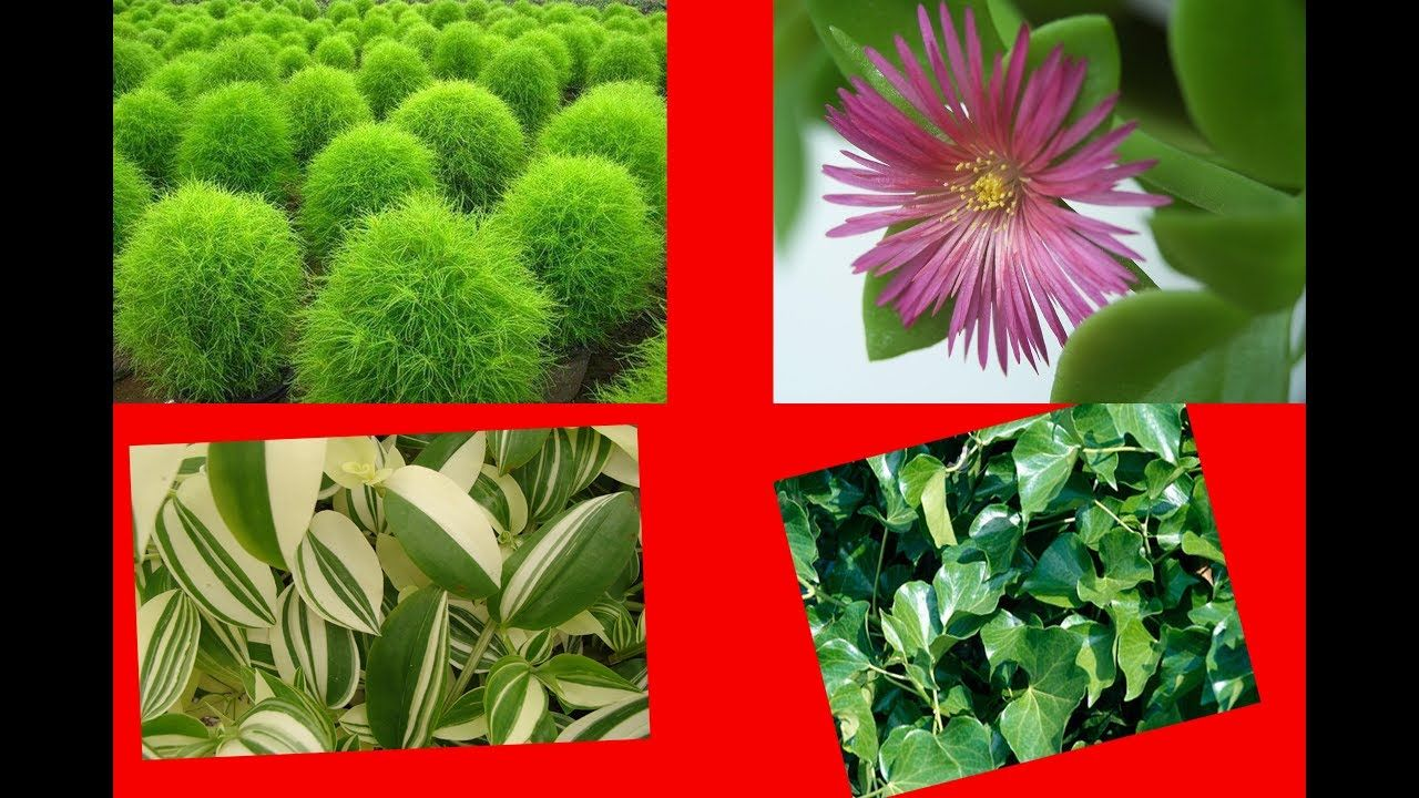 اسرع نباتات الزينة نموا نباتات تنمو بسهولة Youtube Plants Herbs
