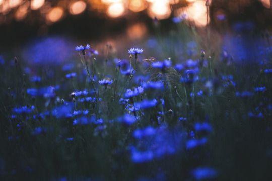 dennybitte: blue spring by Denny Bitte ❤