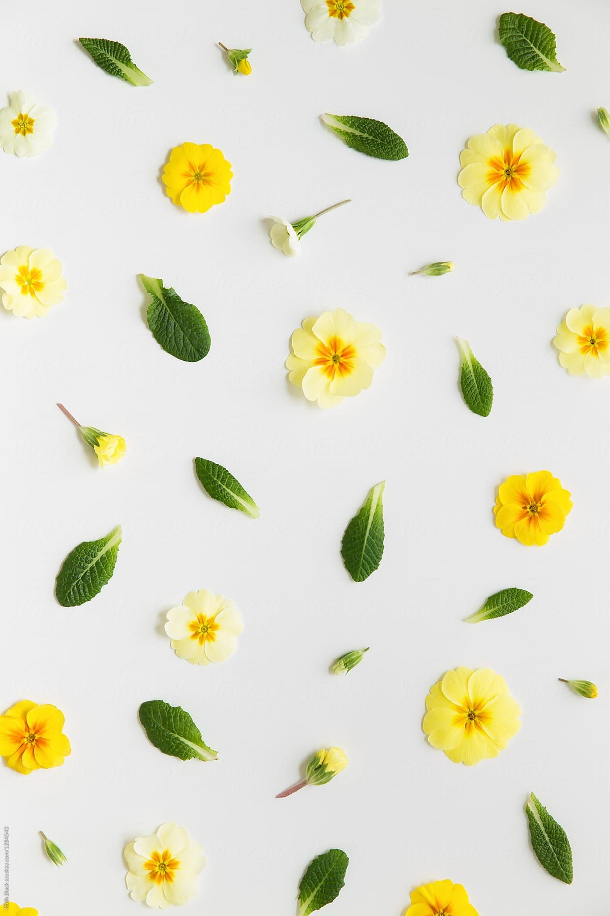 Spring Flower Background Download this highresolution