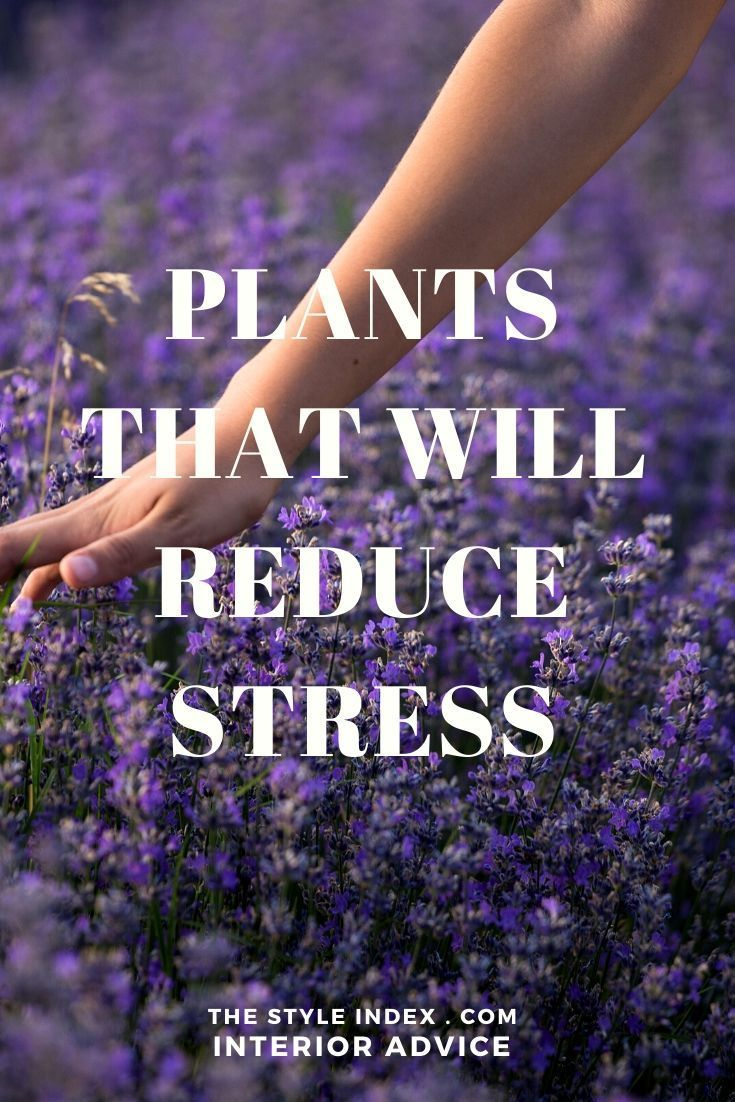 Stress Relief Quotes Plants that will Reduce Stress