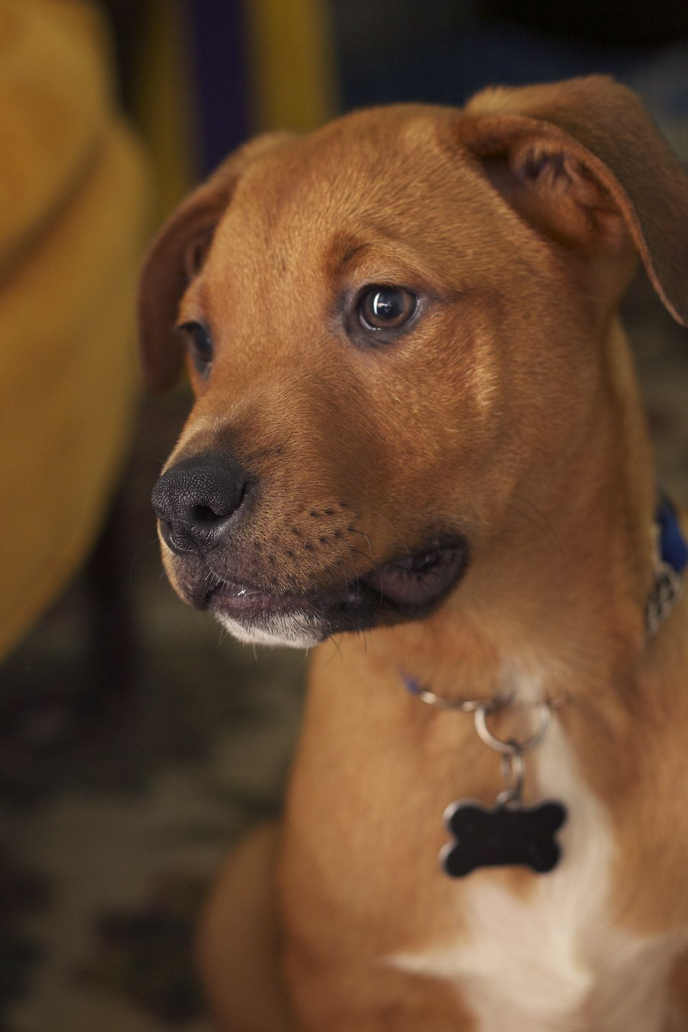 Lucky Dog Animal Rescue puppy Duke is looking for a good home in the