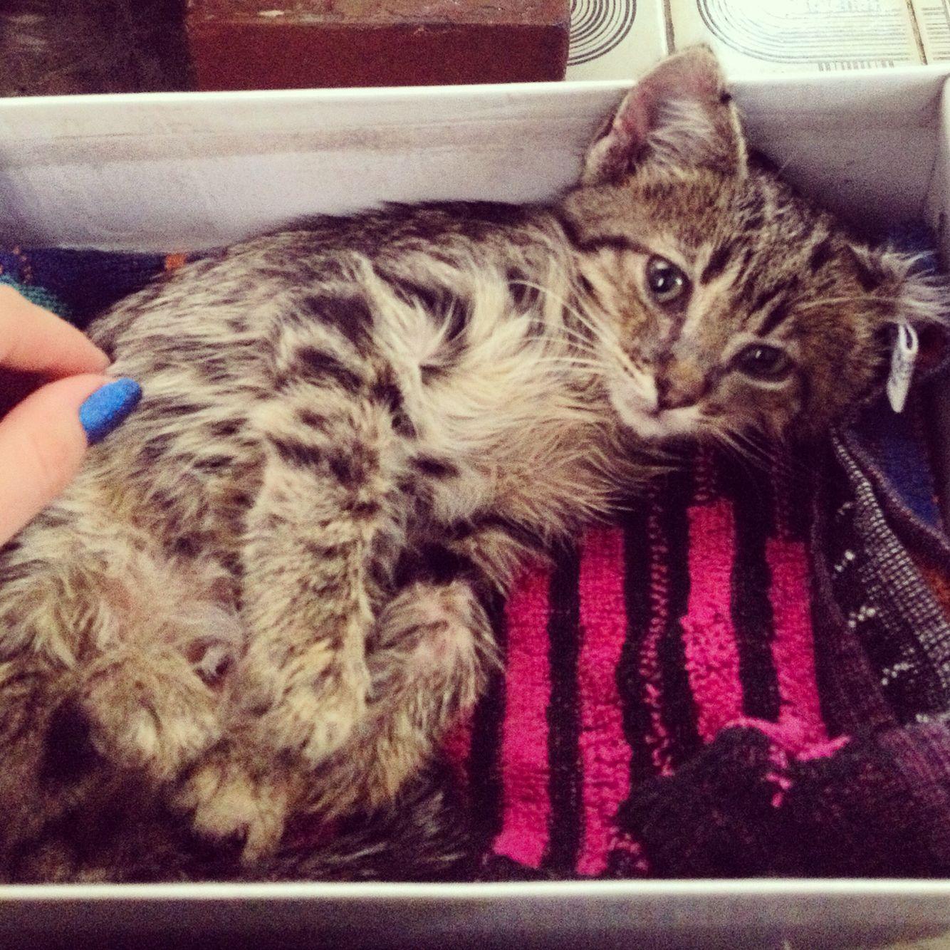 Kotenok Byl Ochen Bolnoj So Slomannymi Zadnimi Lapami Cats Animals Pierre