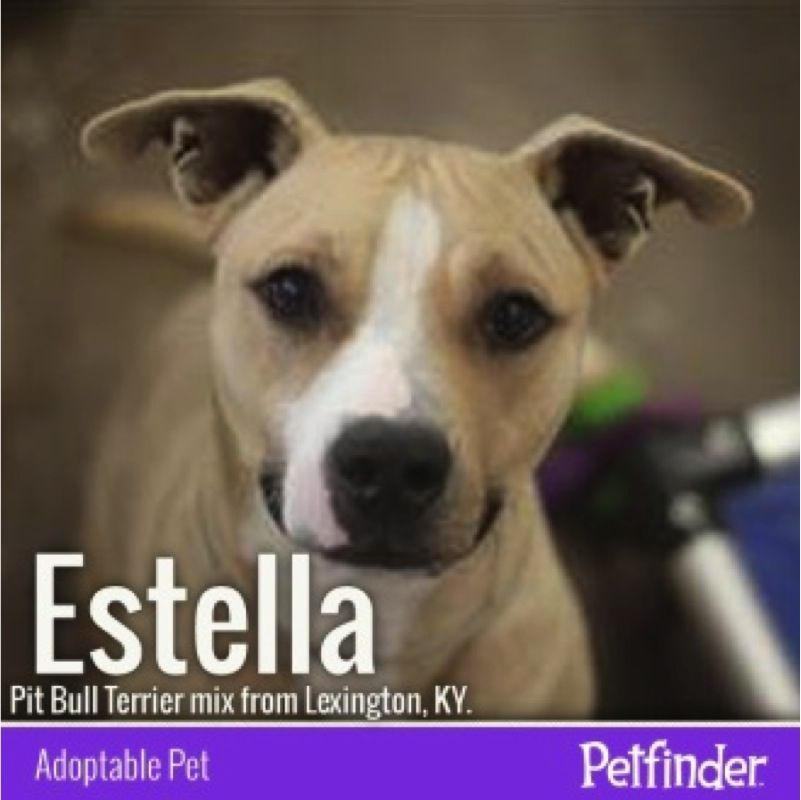 Sometimes it's just right at first sight! Perhaps Estella