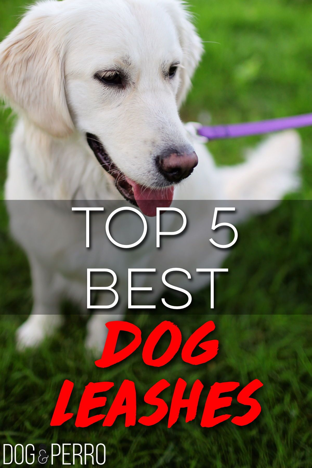 Top 5 Best Dog Leashes You Can Buy Dog Leash Dogs Best Dogs