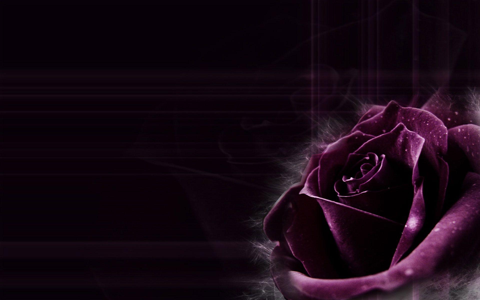 Dark Purple Rose Backgrounds Images Pictures Becuo Purple Wallpaper Black Roses Wallpaper Purple Roses