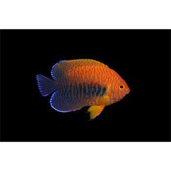 Potters Angel At Petco Saltwater Fish Tanks Fish Tank Supplies Fish Supplies