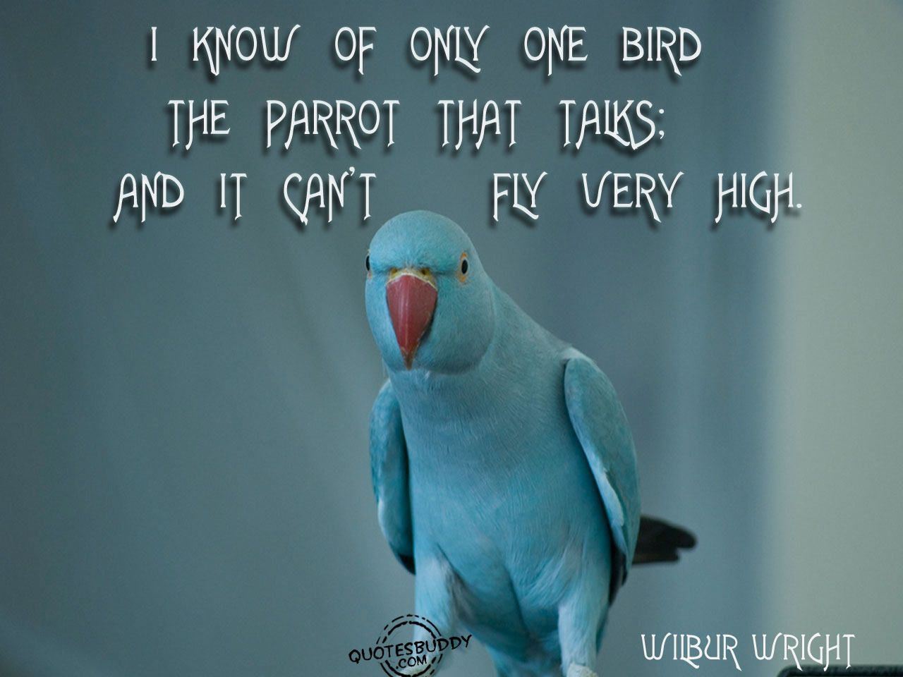 Funny Bird Pictures With Sayings Bird Quotes Funny Bird Pictures New Home Quotes