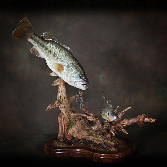 The 25+ best Fish mounts ideas on Pinterest