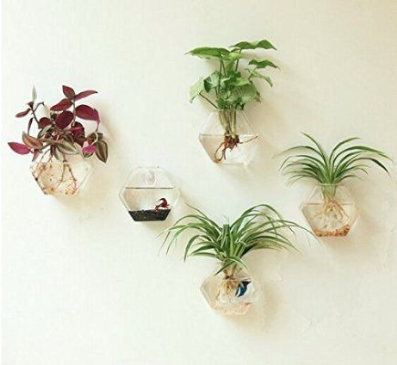 Mkono 2 Pack Wall Mount Hanging Clear Glass Vase Flower Plant Pot Container Planter Terrarium Home Decorat Wall Terrarium Hanging Plants Hanging Glass Planters