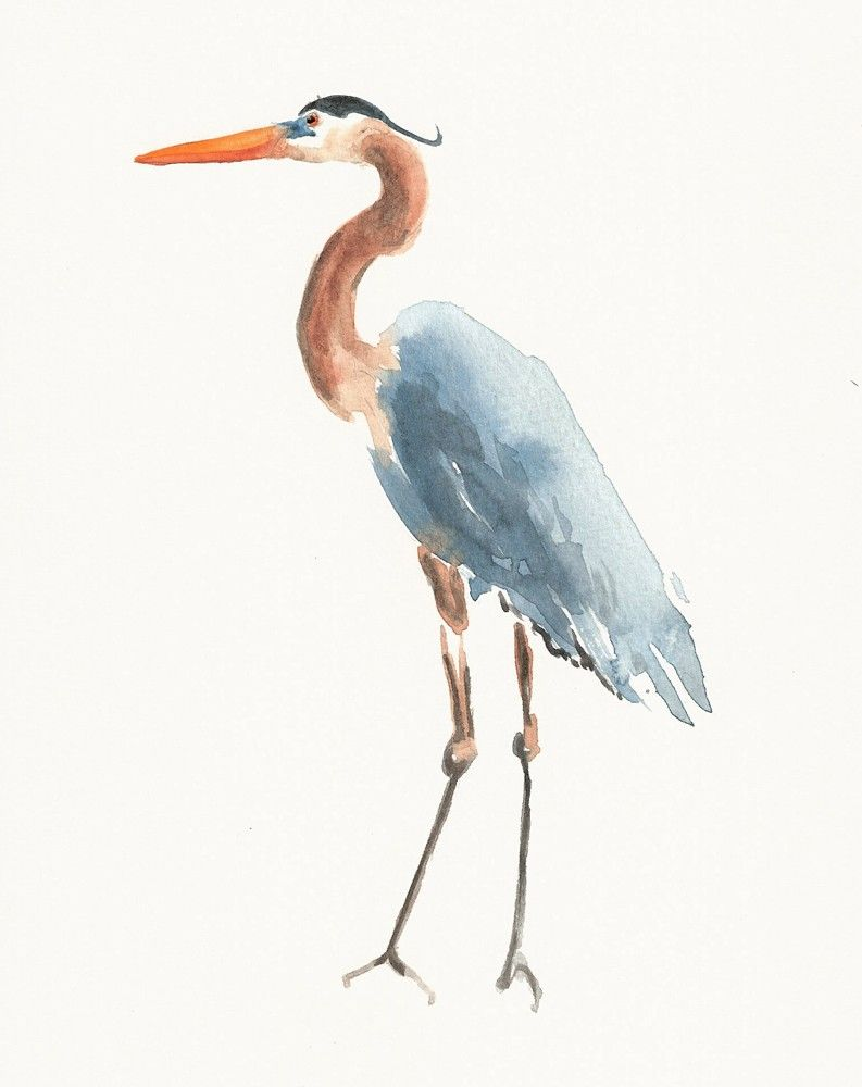 Watercolor Heron Drawings Blue Heron Watercolor Paintings