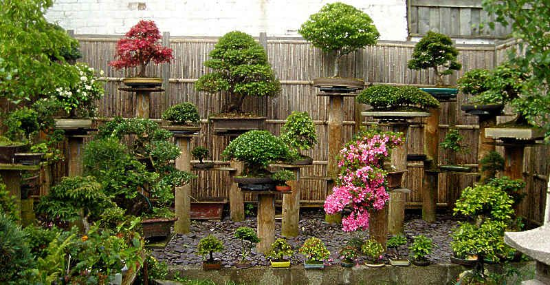 Top 25 ideas about Bonsai Backyard on Pinterest Asian decor
