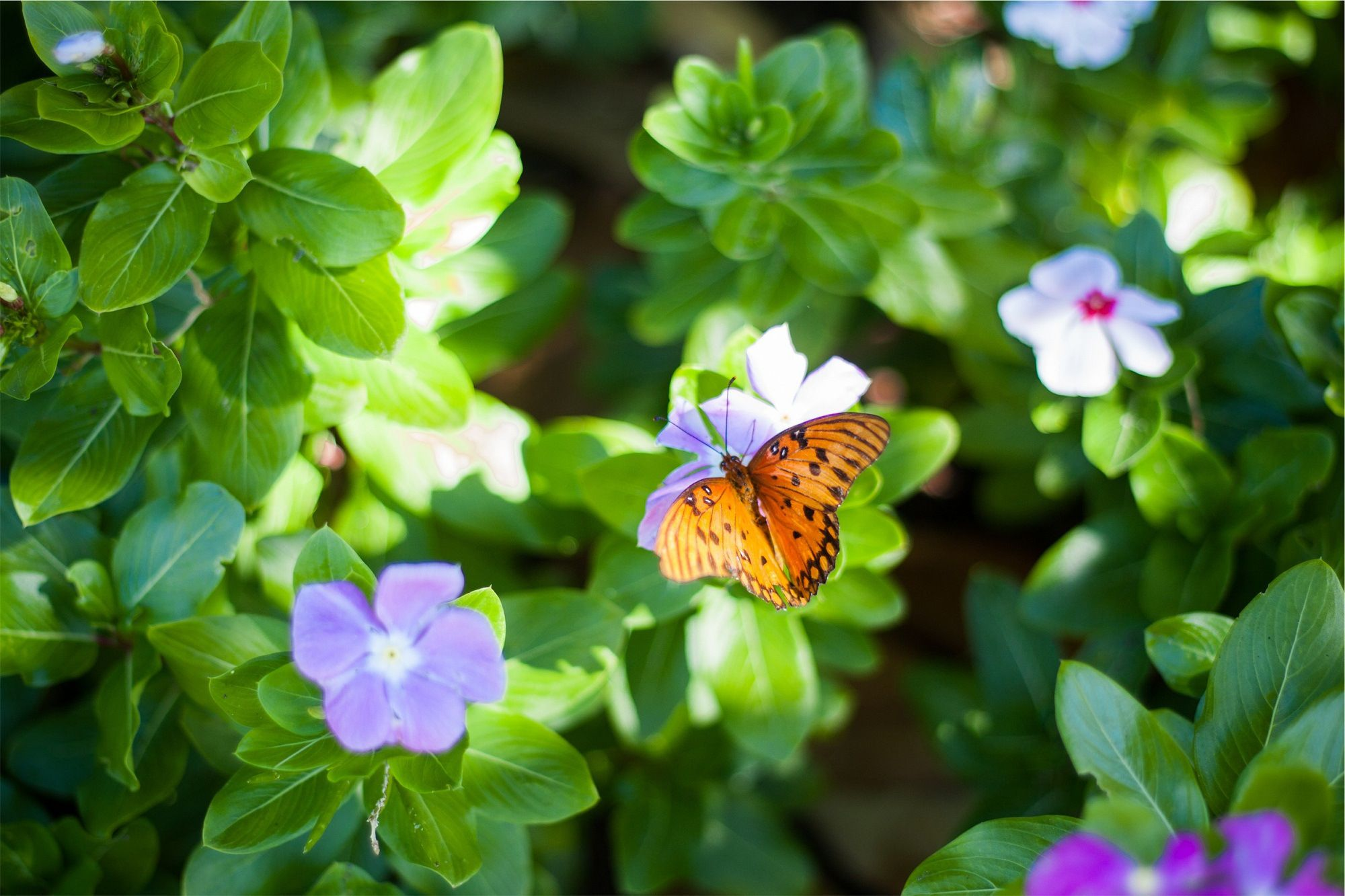 Flowers That Attract Butterflies And Birds Balcony Garden Web Flowers That Attract Butterflies Adrenal Fatigue Recovery Adrenal Fatigue