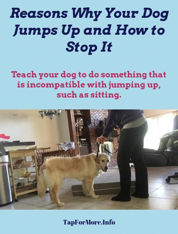 Stop Dog Jumping And How To Train Your Dog Not To Bark Check Pin