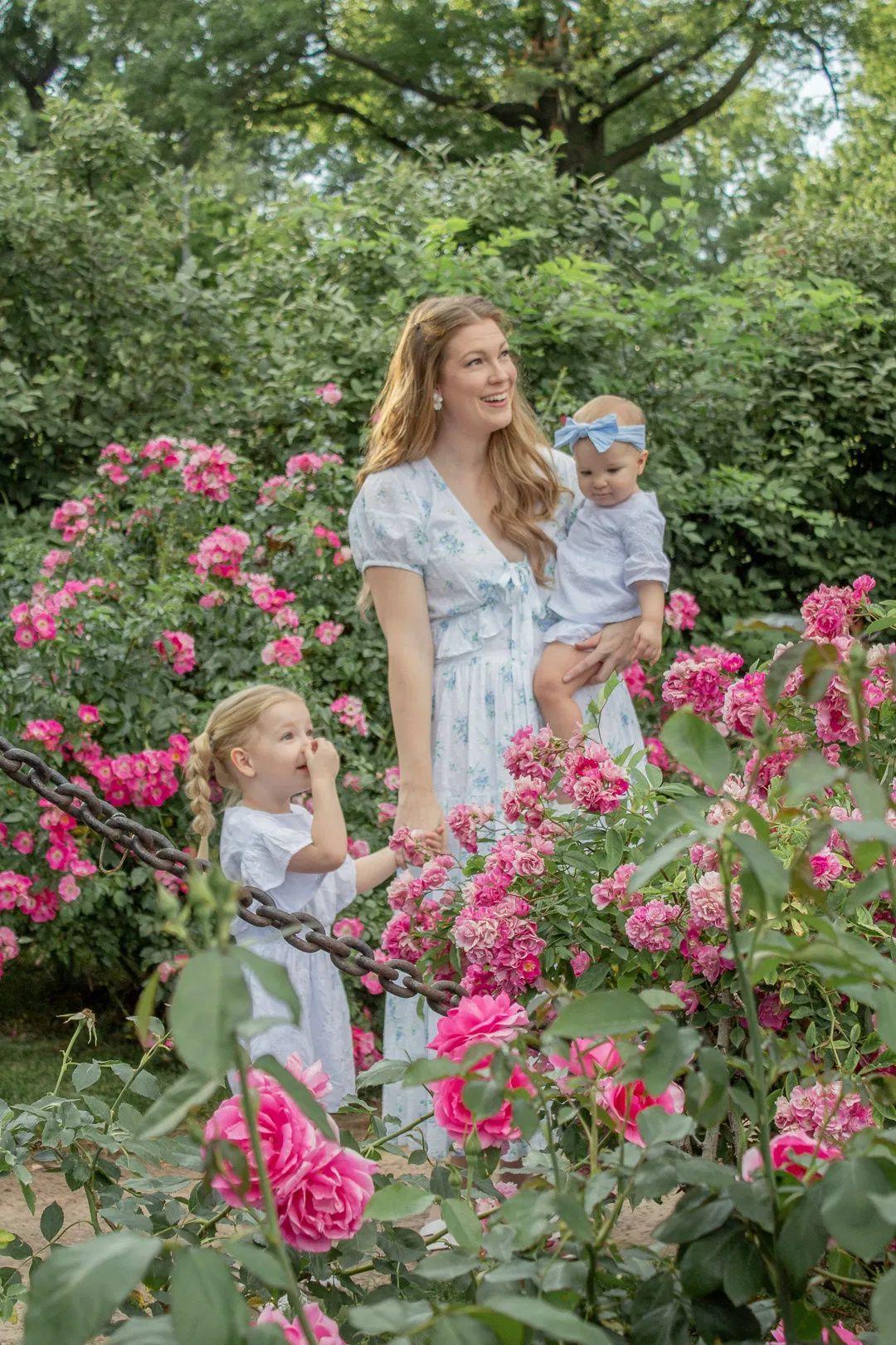 Kansas City Rose Garden Roses Gardens Photoshoot Locations Midwest Flower Field Flowers Flower Park Manicured Garden Pink