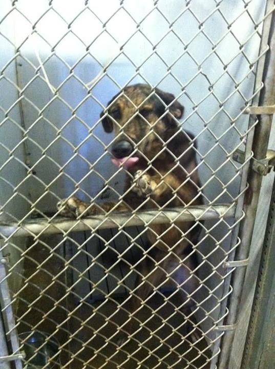 SHARE/PLEDGE/FOSTER/ADOPT/PIN Calhoun County Animal Control Center
