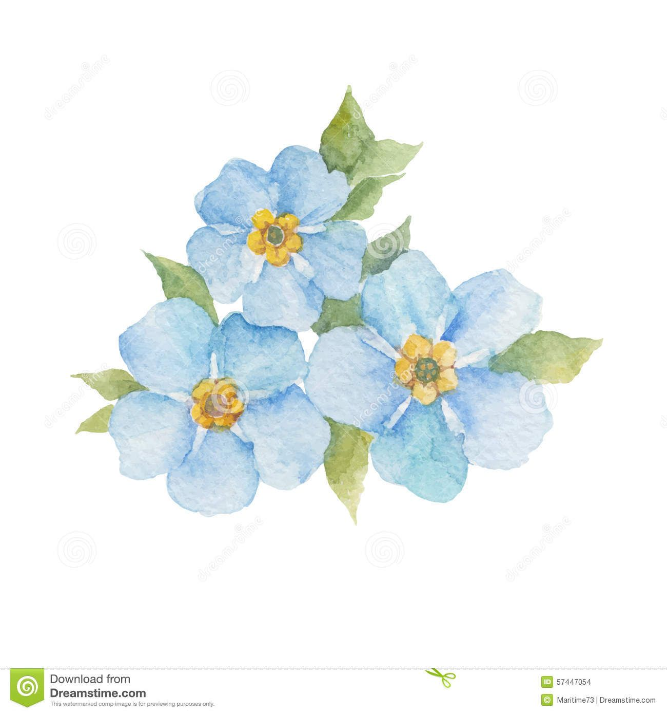 Forget Me Not Flowers On White Background Vector Wate Stock
