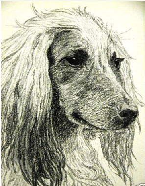 Arthur Wardle (1864 - 1949) was not only the most famous canine illustrator of his time, but also illustrated the most famous breed books and encyclopedias of the day.He is probably the most famous of the artists who painted or illustrated the Afghan Hound. The volume of Wardle's paintings reproduced on collectible cigarette cards alone, totaled approximately 250 ----- (From Afghan Hound Times - Afghan Hound Art Paintings and Ilustrations by Arthur Wardle c 1930's)