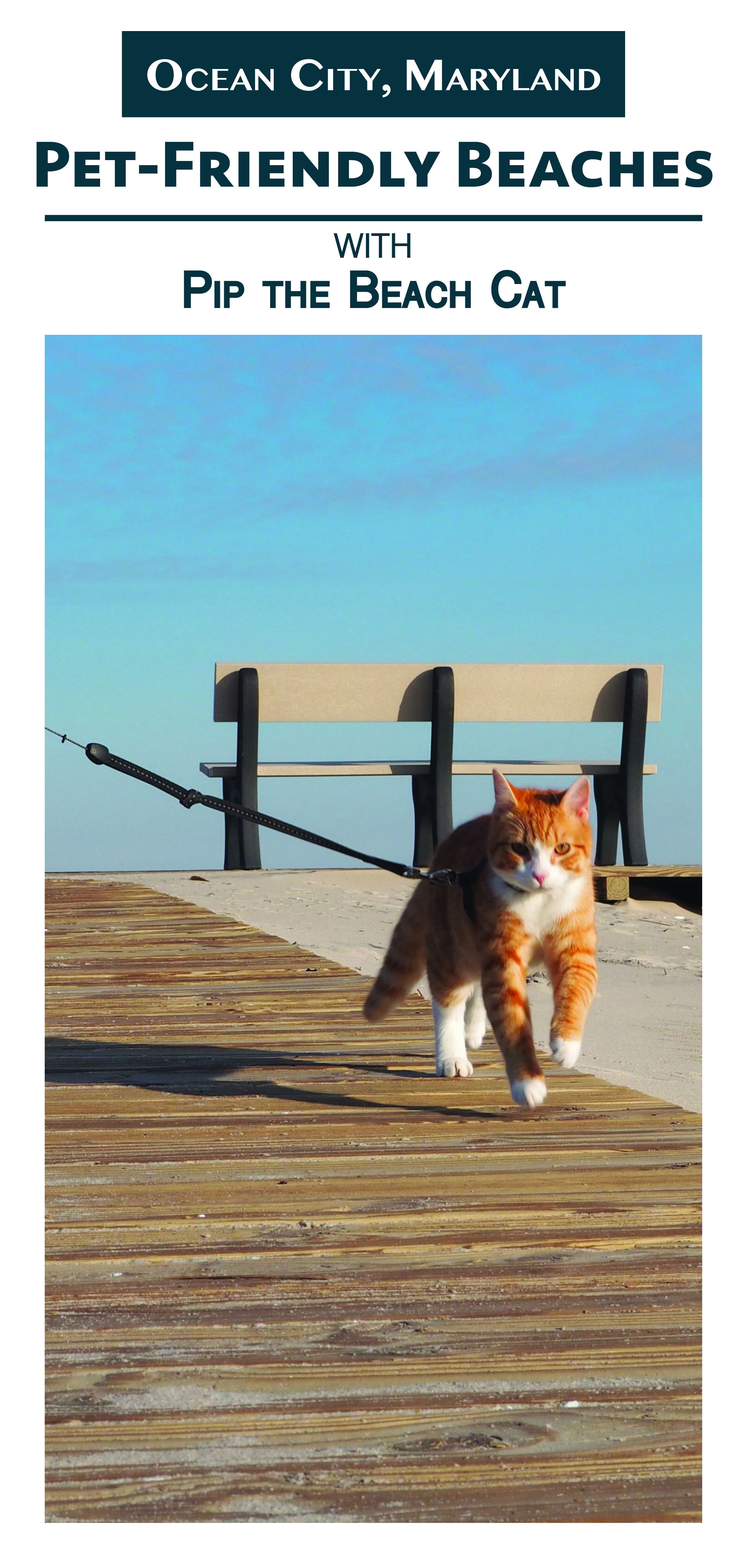Pet Friendly Beaches In Ocean City Ocean City Pet Friendly Hotels Ocean
