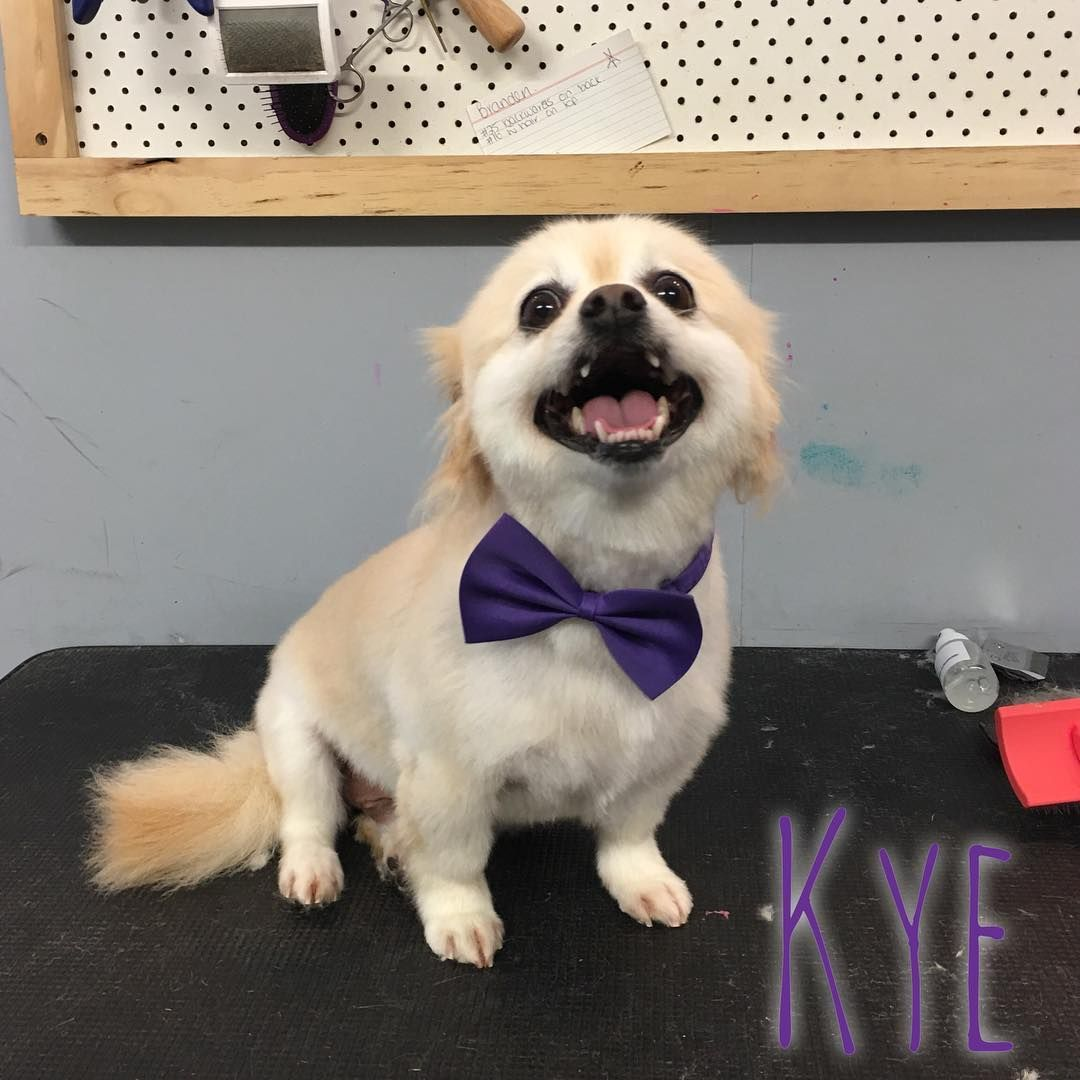 Kye Loveisinthehairdoggrooming Dog Dogs Dogsalon Doggroom Doggroomer Groomer Groomingsalon Grooming Pet Petsofinstagram Dog Salon Dogs Dog Groomers