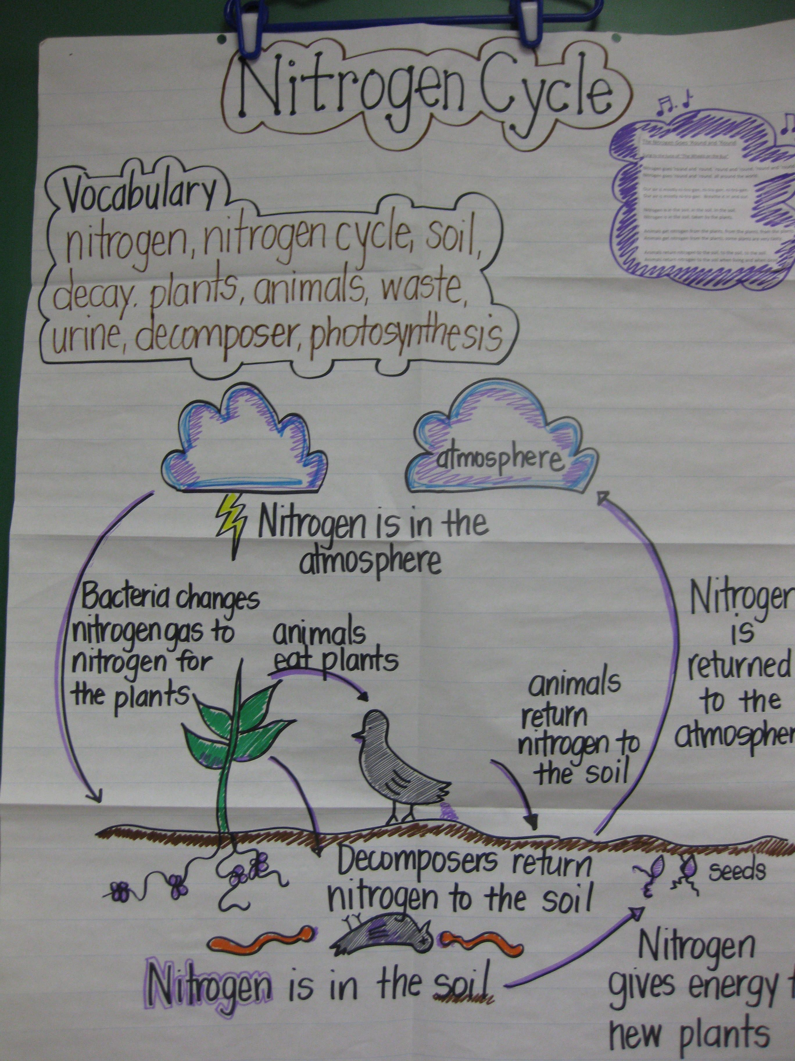 staar review anchor chart i make this one to review the nitrogen cycle with students before the 5th grade science staar test [ 2736 x 3648 Pixel ]