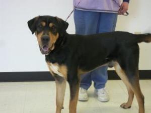 Tanner Hound Dog Davenport Ia Humane Society Of Scott County