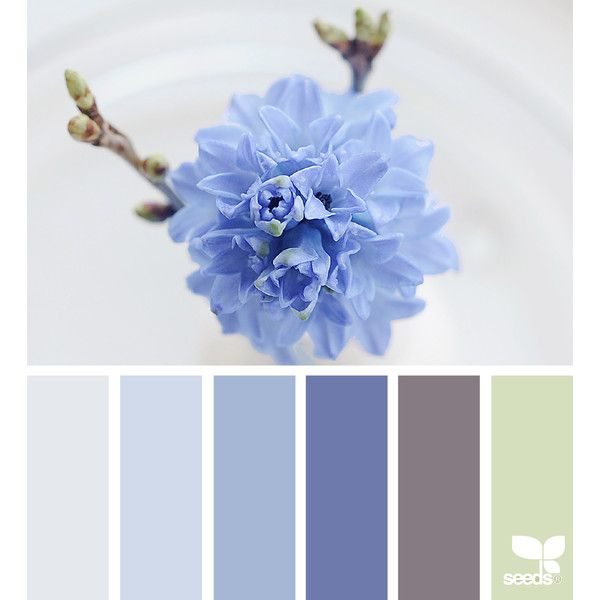 design seeds   for all who ♥ color ❤ liked on Polyvore featuring design seeds, backgrounds and filler