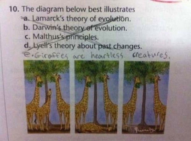 Test Answers That Are Totally Wrong But Genius Humor And - 38 test answers totally wrong 100 genius