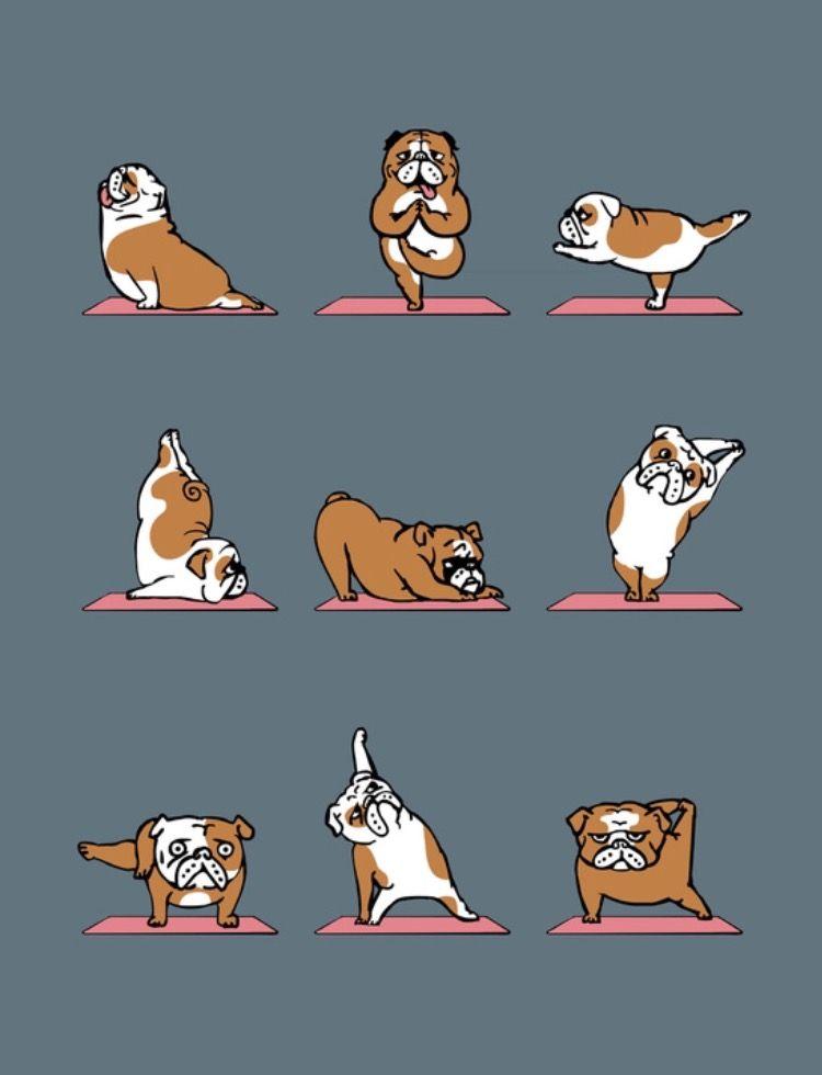 Pin by Carrie Ochoa on I workout. Bulldog breeds, Dog