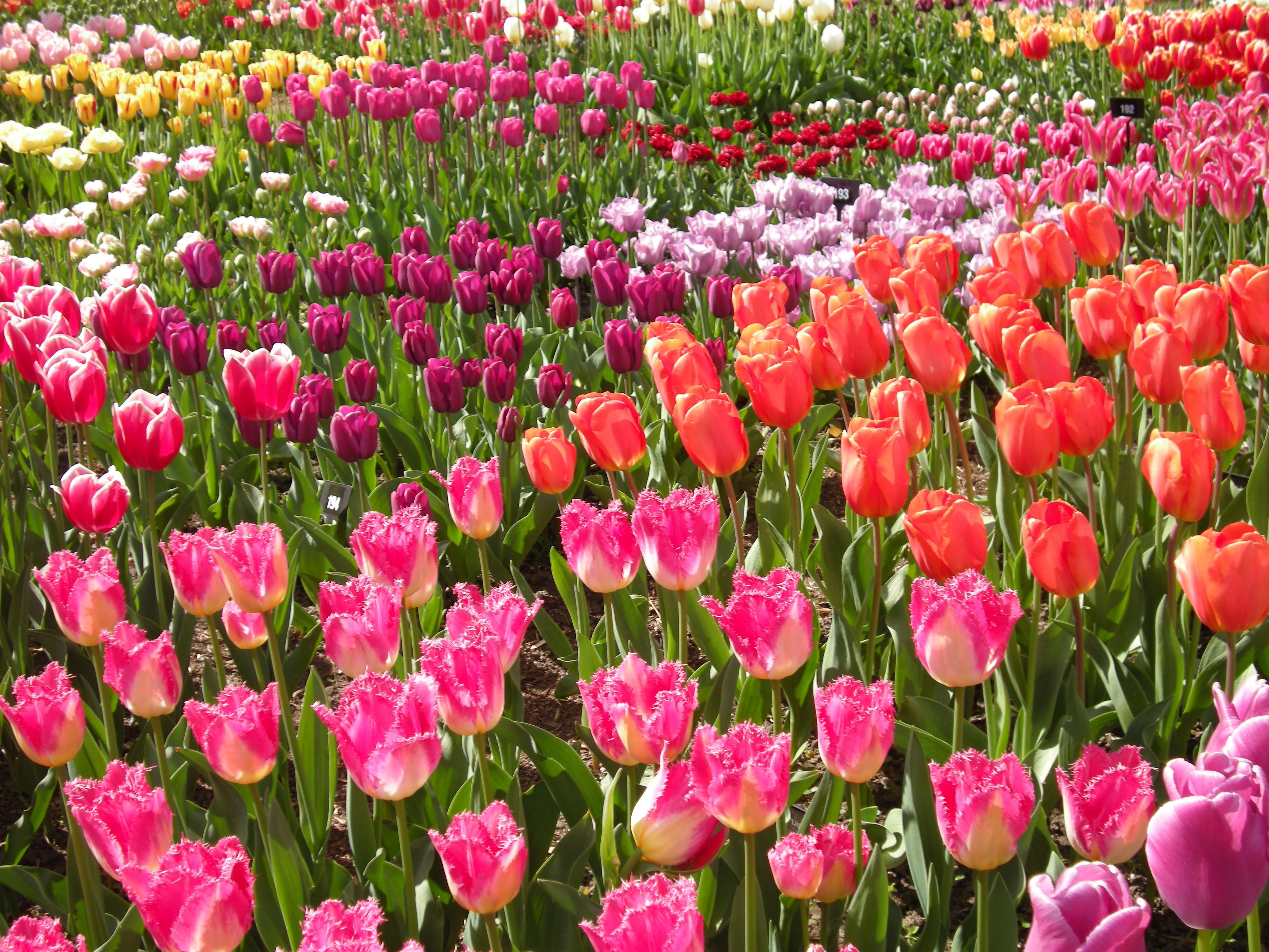 RHS Wisley - beautiful flowers