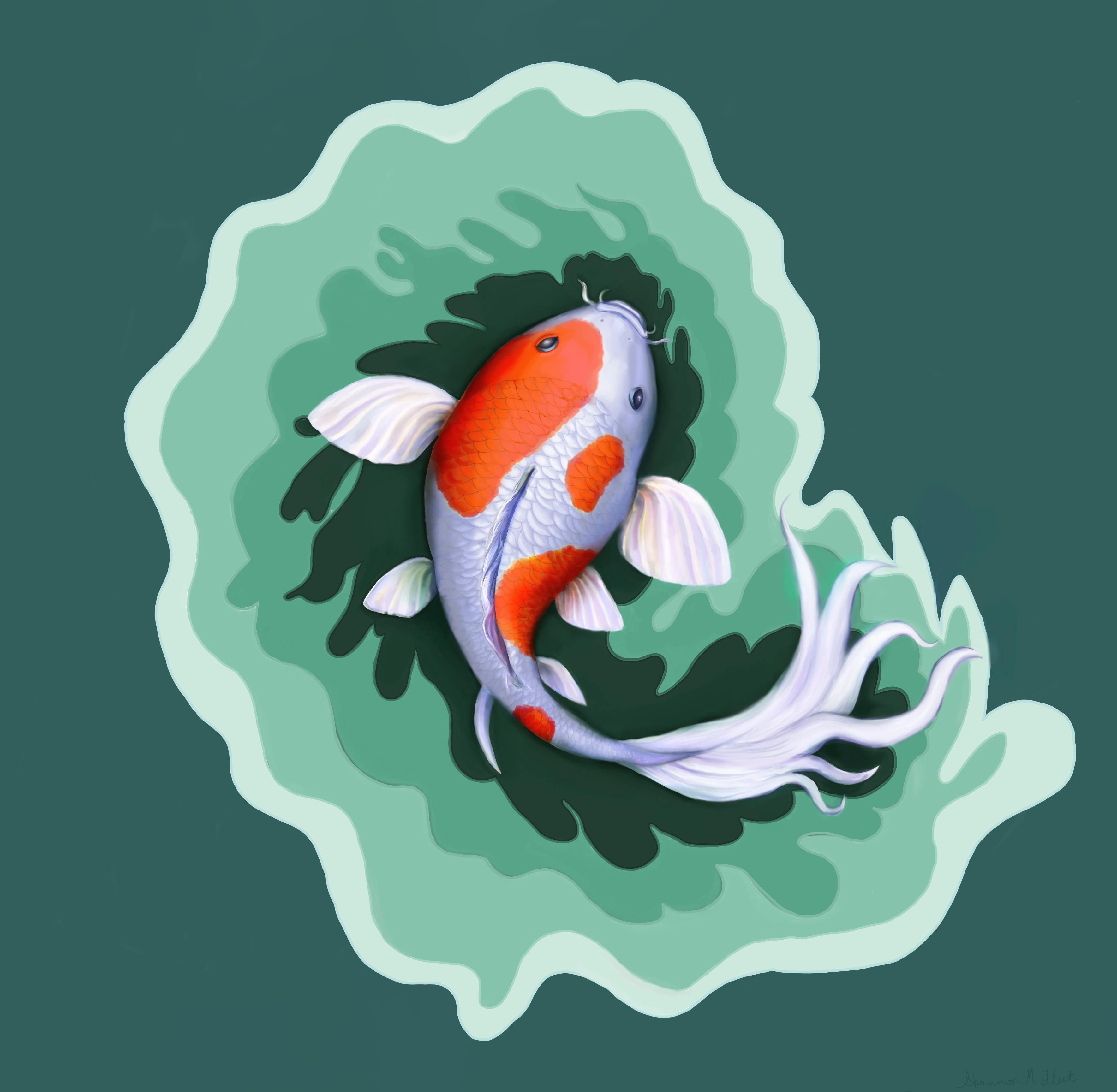 Orange And White Koi Fish Digital Painting By Shannon Fleet Koi Fish Fish Art Fish